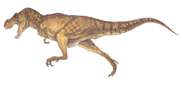 Archivo:T-rex female.jpg