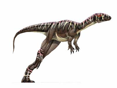 Agilisaurus.jpg