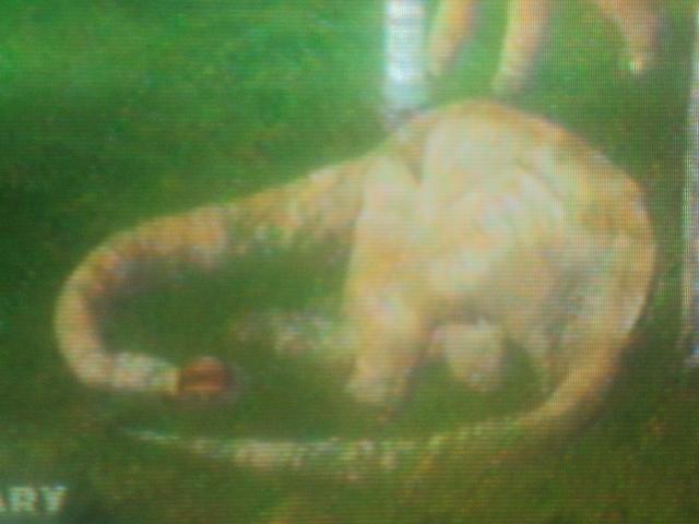 File:A Brachiosaurus is sleeping.JPG