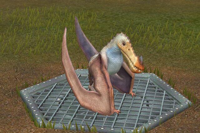 File:Limnorhynchus (0).jpg