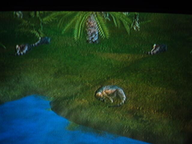 File:4 Pachycephalosaurus.JPG