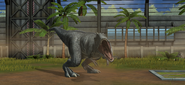 Jurassic World Majungasaurus (16)