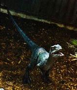 Raptor delta