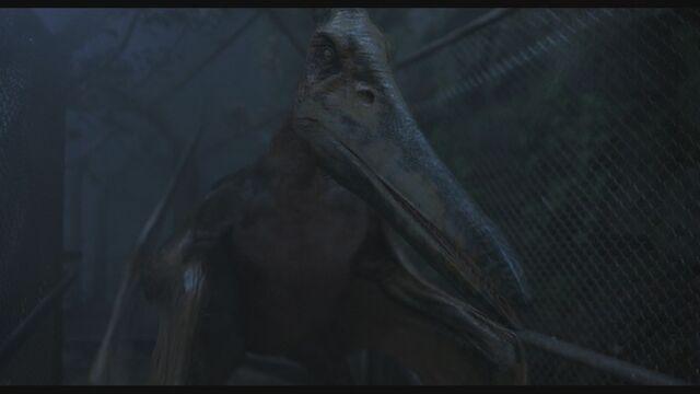 File:Pteranodon-1.jpg