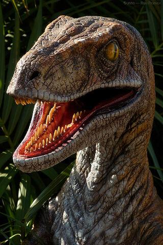 File:Velociraptor 6001-1-.jpg