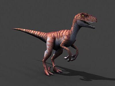 TC Isle raptor.jpg
