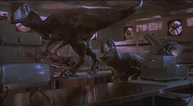 File:Velociraptor 5.JPG