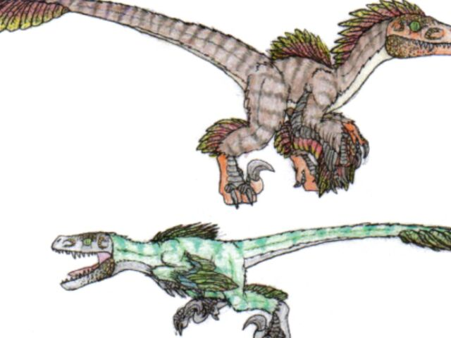 File:Featheredraptor12.jpg