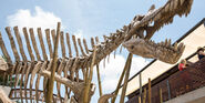 Spinosaurus-skeleton