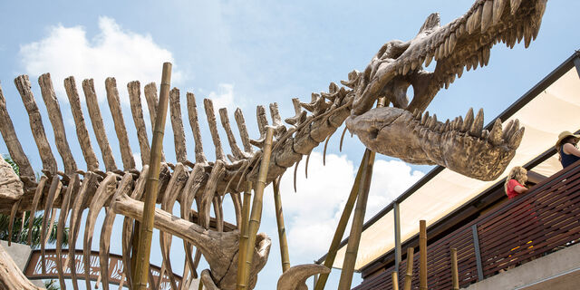 File:Spinosaurus-skeleton.jpg