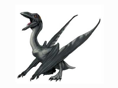 File:JPI-pterodactylus.jpg
