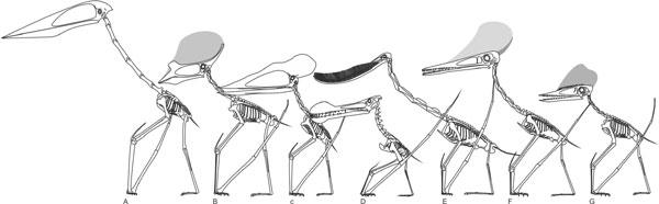 File:Mark-Witton-pterosaur-skeletal-diversity-600-px-tiny-Dec-2013-Tetrapod-Zoology.jpg