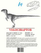 Ingen Dinosaur Info Sheets Velociraptor