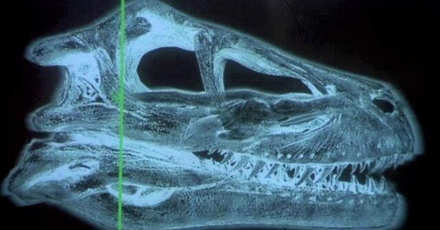 File:Raptorscan.jpg