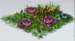 Purple Rafflesia
