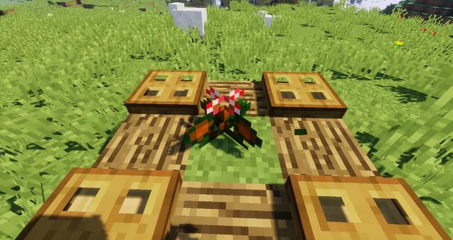 File:Woolly-stalked Begonia.png