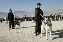 Rahmani Guard Dog
