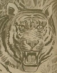 Tigre MI Cara