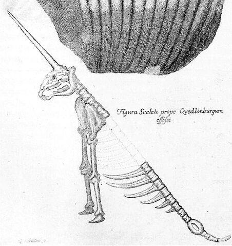 File:Gottfried Leibniz unicorn skeleton.jpg