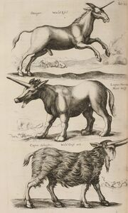 John Jonston Historiae Naturalis de Quadripedibus Tabula XII