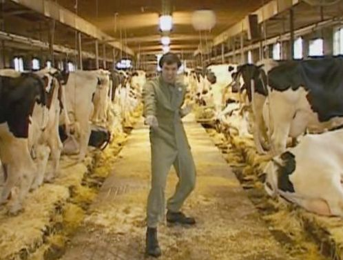 File:Kennywithcows.jpg
