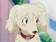 01 Natsumi the dog