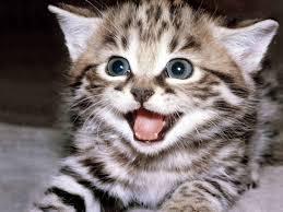 File:I is happy!.jpg