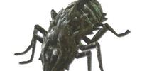 Cadaver Beetle