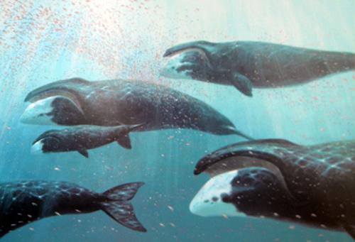 File:Whales-bruce-pearson.jpg