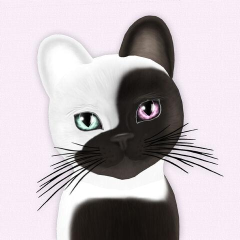 File:Chateau Cat Cocoa & White No 1.jpg