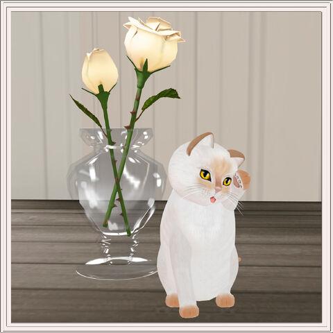 File:Priceless ~ Siamese Flame.jpg