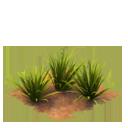 Sw tropicalgrass last