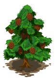 Pine tree market
