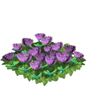 Tulip flower bed lavender last