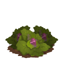 File:Cabbage last.png