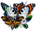 File:Butterfly collection.png