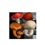 File:Mushroom set.png
