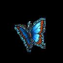 Indigo indigo butterfly