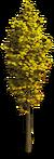 Tree-Autumn tree