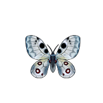 File:Butterfly parnassius.png