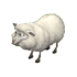 Sheep adult