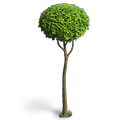 Res mellow tree 6.png