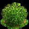 Flax plant ph2