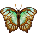 Coll butterflies turquoise