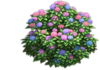 Resource-Hydrangea 2