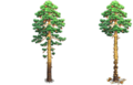 Res pine 3 whole cut.png