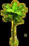 Banana tree ph2