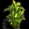 Res algae thickets 1