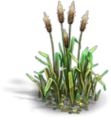 Res cattail 2.png