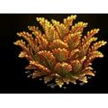 Res juniper yellow 2.png
